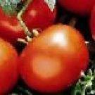 Manitoba Tomato Seeds - 50