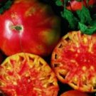 Hillbilly Potato Leaf Tomato Seeds - 50
