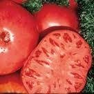 Red Brandywine Tomato Seeds - 50