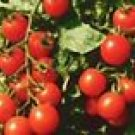 Small Red Cherry Tomato Seeds - 50