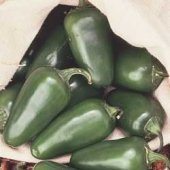 Tam Jalapeno Pepper Seeds (Mild) - 30