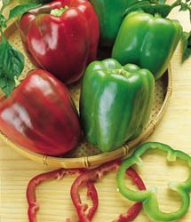Cal. Wonder Bell Pepper Seeds - 30