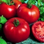 Moscow VR Tomato Seeds - 50