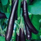 Long Purple Eggplant Seeds - 50