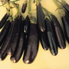 Little Fingers Eggplant Seeds - 60