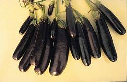Little Fingers Eggplant Seeds - 60