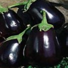 Black Beauty Eggplant Seeds - 50