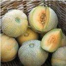 Minnesota Midget Melon Seeds - 100