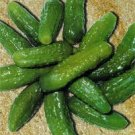 Paris Pickling Cucumber - 35