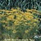 Bouquet Dill Seeds - 250