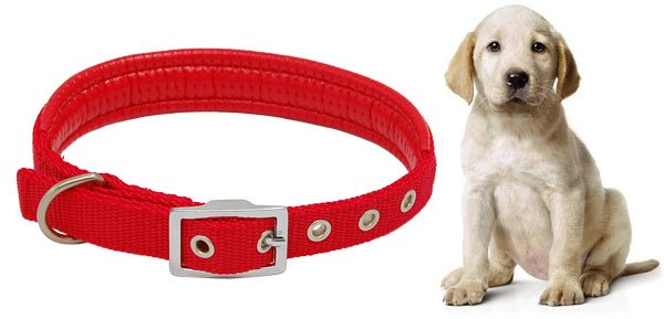 Red Dog Pet Neck Collar Leather Band Strap w Buckle