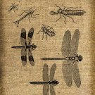 Vintage DRAGONFLIES, Altered, Iron On Digital Image Transfer No.126