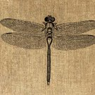 Vintage DRAGONFLY Iron On Digital Image Transfer No.124