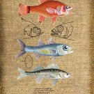 Vintage Fish Collage Iron On Digital Image Transfer No.118