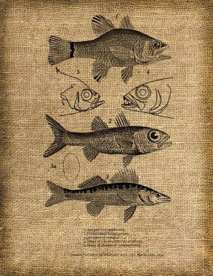 Vintage, Altered, Whimsical, Ephemera, Iron on,Fish Collage Iron On Digital Image Transfer No.109