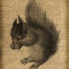 Vintage, Altered, Printable, Iron On, Ephemera, Squirrel, Digital Image No. 129