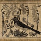 VINTAGE, Altered, Ephemera, Iron On, BIRD DIGITAL DOWNLOAD  No.26