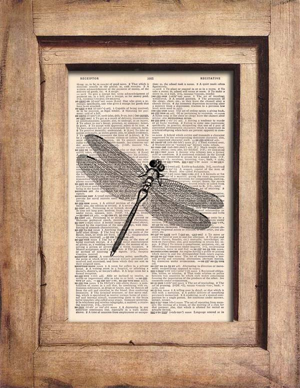 Vintage Dragonfly Dictionary Page Print 0062