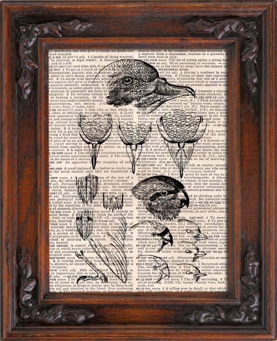 Art Print, Vintage, Birds Anatomical, Dictionary Page Print 0108
