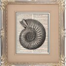 Art Print, Vintage, SEASHELL, Dictionary Page Print 0106