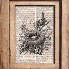 Art Print, Vintage, BIRDS, BIRD NEST, Dictionary Page Print 0091