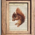 Vintage Squirrel Dictionary Page Print 0050