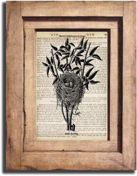 Vintage Bird Nest, Birds Dictionary Page Print 0028