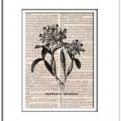 Art Print Vintage CATTLEYA SKINNERY Dictionary Print 0003