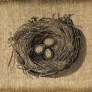 Vintage BIRD NEST, Altered, Printable, Iron On, Ephemera, Digital Image No. 157