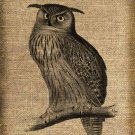 Vintage, Owl, Altered, Ephemera, Iron On, Digital Image Transfer No 176