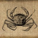 VINTAGE, Crab, Iron on, Ephemera, Altered, Digital Image No. 207