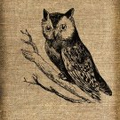 Vintage , Owl, Altered, Printable, Iron On, Ephemera, Digital Image No. 217