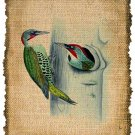 Vintage Birds, Altered, Printable, Iron On, Ephemera, Digital Image No. 274