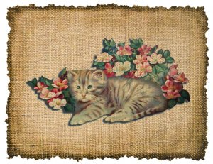 Vintage, Kitten, Altered, Ephemera, Iron On, Digital Image Transfer No 282