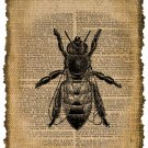 Vintage, Bee, Altered, Ephemera, Iron on, Image No. 287