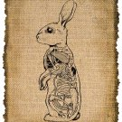Vintage , Rabbit Anatomic, Ephemera, Altered, Digital Image Transfer  No. 381