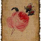 Vintage , ROSE, Ephemera, Altered, Digital Image No. 386