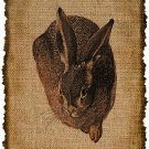 Vintage , Hare, Ephemera, Altered, Digital Image Transfer No. 392