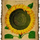 Vintage , Sunflower, Ephemera, Altered, Digital Image Transfer No. 394