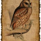 Vintage, OWL, Altered, Ephemera, Iron on, Digital Image Collage No.458