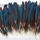 Macaw Wing & Tail Feathers 100 Piece Lot Peyote Headdress Crafts Pow Wow Blue Green Parrot Bird