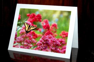 Butterfly on Red Valerian - Set of 4 Note Cards