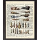 Spiral Sea Shells Printed On 1900's Dictionary Page 8x10