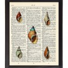 Tiny Sea Shells Printed On 1900's Dictionary Page 8x10