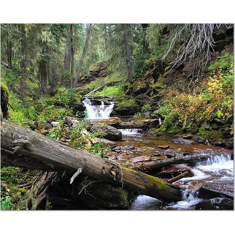 Colorado Creek 8x10 photo