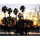 Palm Trees and Sunset 8x10 photo