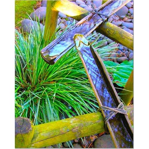 Bamboo Waterway 8x10 photo