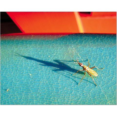 Catalina Bug 8x10 photo