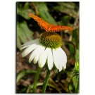 Butterfly on Daisy Magnet
