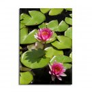Pink Lotus Flowers Magnet